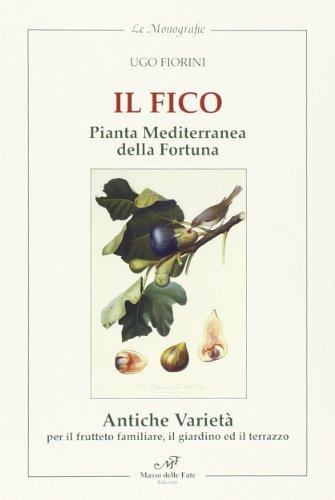 il fico pianta mediterranea della fortuna. antiche varietà per frutteto familiare, il giardino e il terrazzo