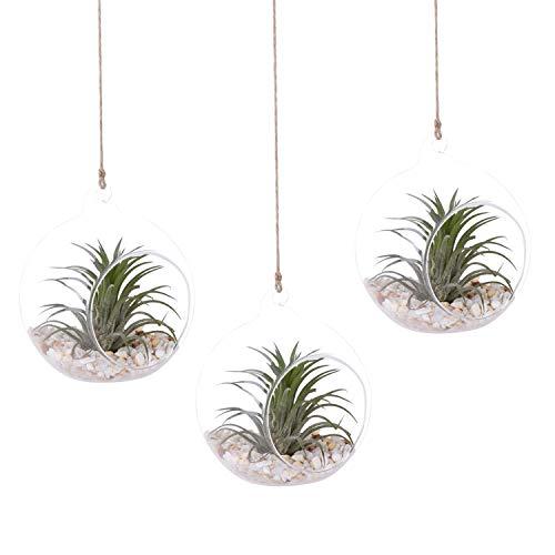 AUTOARK 43/10,2cm Glas Globe-Zum Aufhängen Pflanze Terrarium Glas Vase für vollmundigen Air Pflanze, Kerzenhalter, Home & Office Decor Accent, 3Pack, apt-006