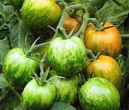 Bobby-Seeds BIO-Tomatensamen Green Zebra, Sortenrar. Portion