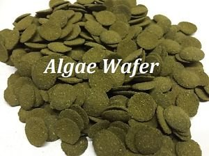 Spirulina Algae Wafer Tablet 100Gram -5KG Tropical Aquarium Pleco Catfish, bottom Feeder Fish Food Feed (20Gram Sample Pack)