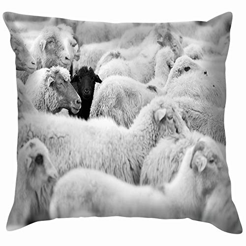beautiful& One Black Sheep Herd Whites Animals Wildlife Nature Throw Pillows Covers Accent Home Sofa Cushion Cover Pillowcase Gift Decorative 18X18 Inch