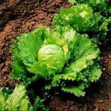 JustSeed Salat