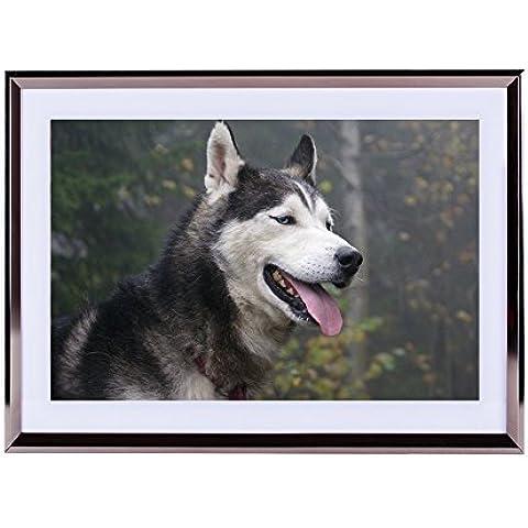Arte–plateado de pared marco de madera imagen–Husky siberiano con ojos azules 16x