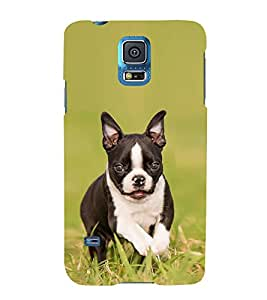 FUSON Cute Little Puppy Dog 3D Hard Polycarbonate Designer Back Case Cover for Samsung Galaxy Grand 2 :: Samsung Galaxy Grand 2 G7105 :: Samsung Galaxy Grand 2 G7102 :: Samsung Galaxy Grand Ii