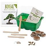 Bonsai Starter Kit Anzuchtset inkl. GRATIS eBook - Pflanzset aus Mini-Gewächshaus, Samen & Erde - nachhaltige Geschenkidee für Pflanzenfreunde (Samen: Ölbaum + Australische Kiefer)