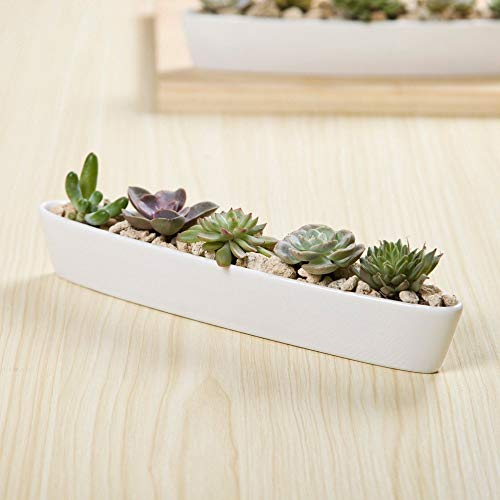 Willsego Olivenboot Blumentopf Weiße Keramik Sukkulenten Kaktusblumentopf Outdoor Garten Decor (Farbe : Weiß, Größe : 10pcs)