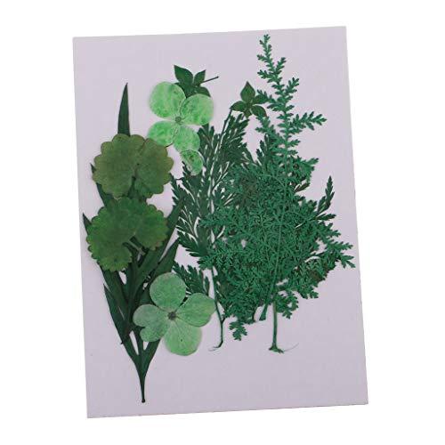 FLAMEER 1 Packung Sortierte Natürliche Gepresste Getrocknete Blumen Mehrfachen Mischung Verlässt DIY Kunsthandwerk -