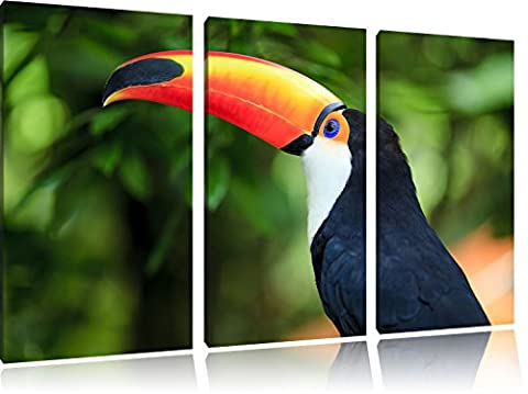 Toucan coloré 3-piece Canvas Art 120x80 image on canvas, XXL huge Pictures completely framed with stretcher, Art print on wall picture with frame, gänstiger as a painting or an oil painting, not a poster or banner