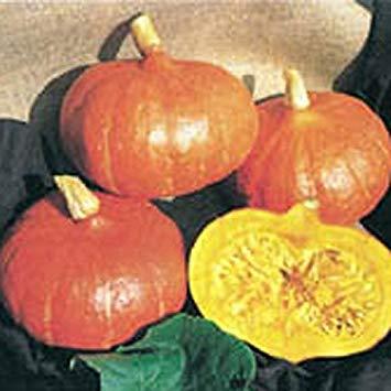 SANHOC Samen-Paket: Kings Seeds - Winter Squash Uchiki Kuri - 15 SeedsSEED