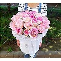 VISTARIC 14 20 Pz Bonsai Fiori Amaranthus Tricolour Semi Poinsettia Amaranto Tasso Di