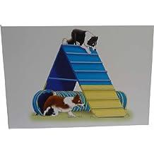 Agility Collie (estructura) tarjetas (10 unidades)