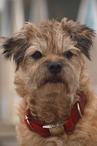 Journal: Border Terrier: 140 Page 6