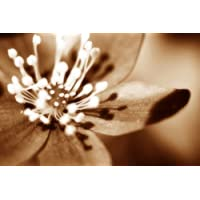 LARGE CANVAS ART PRINT BROWN SOFT FLOWER READY TO HANG 30 X 20 INCHES preiswert