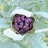 FERRY Germinazione dei Semi: 2 Grammi Nastri Semi di carciofo Violetto