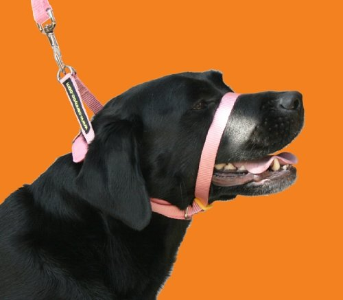 Dog Canny Collar Pink Size 2 1