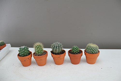 micro-cactus-collection-starter-set-of-5-excellent-quirky-gift
