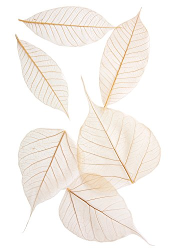 arnold-grummer-semi-transparent-assorted-fossilized-leaf-3-4-inches-pack-of-48