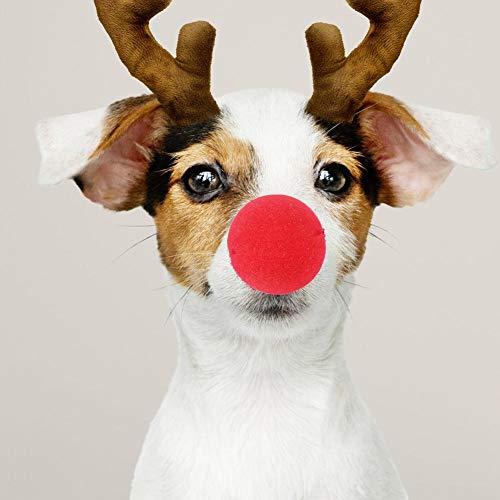 waysad Red Nose Sponge Nose Für Zirkus Kostüm Party Value Pack Mit 50 Nasen Für Themengeburtstag Karneval Party Dress Up Festliche Weihnachten Rentier Nasen Big Sale (Vorschul Halloween Kostüme)