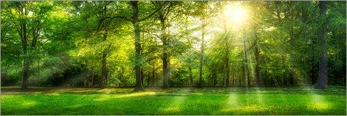 Acrylglasbild 150 x 50 cm: Wald Panorama mit Sonnenstrahlen im Sommer von Jan Christopher Becke - Wandbild, Acryl Glasbild, Druck auf Acryl Glas Bild