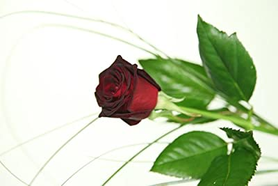 Schwarze Rose - Deluxe - inkl. gratis Kultvase - Blumenversand Rosenbote von Blumenversand Rosenbote - Du und dein Garten