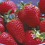 #8: Greenly Strawberry Seeds - 20 Seeds