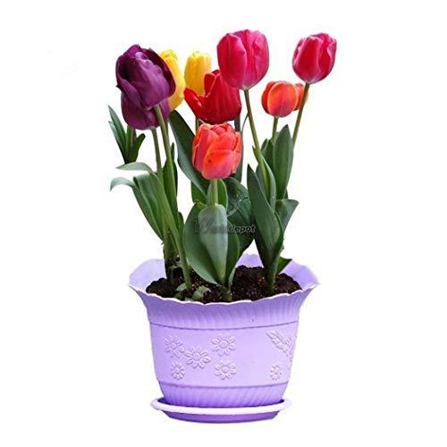 Go garden 50pcs: 50 / 100pcs # 7 colores colori del fiore del tulipano bulbi semi perenni primavera bloom 01