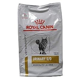 Royal Canin Urinary S/O LP 34Gatto Fodera trockenfutter–Dieta Fodera di malattie urinarie movimento