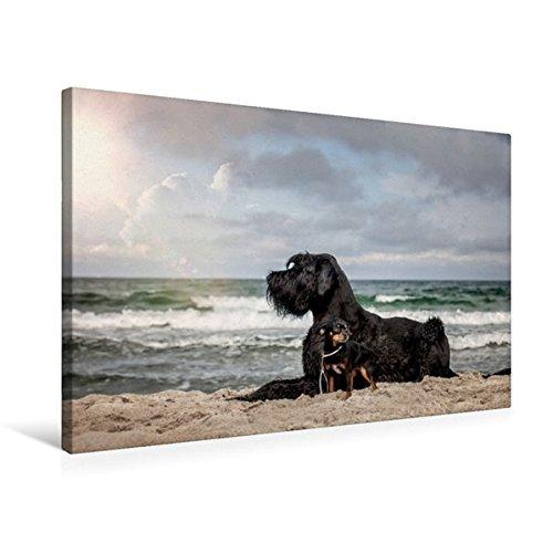 Premium Textil-Leinwand 75 cm x 50 cm quer, Hunde am Meer | Wandbild, Bild auf Keilrahmen, Fertigbild auf echter Leinwand, Leinwanddruck: Tierische Freundschaft (CALVENDO Tiere) (Beschützer Planer)