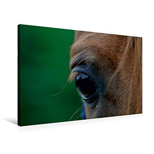 Premium Textil-Leinwand 90 cm x 60 cm quer, Ein Motiv aus dem Kalender Pferdekalender   Wandbild, Bild auf Keilrahmen, Fertigbild auf echter Leinwand, Leinwanddruck (CALVENDO Tiere)