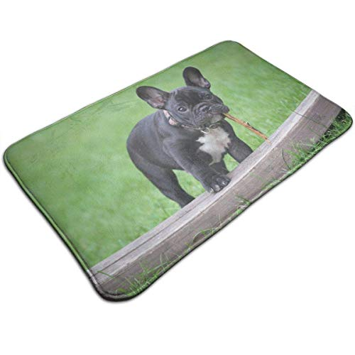rutschfeste saugfähige Badematte - Süße französische Bulldogge Teppich Teppich für Wohnkultur/Küche/Eingang/Innen/Außen/Wohnzimmer (Küche-teppich Französische)