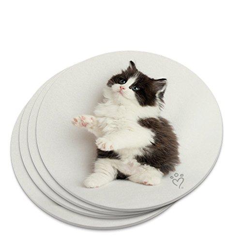 Perserkätzchen Katze schwarz weiß NEUHEIT Untersetzer Set