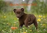Aussie Welpen 2020 (Wandkalender 2020 DIN A3 quer): Australian Shepherd Welpen (Monatskalender, 14 Seiten ) (CALVENDO Tiere)