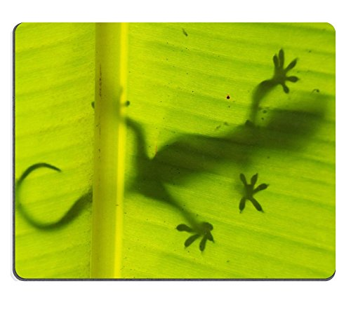 luxlady-naturkautschuk-gaming-mousepads-silhouette-of-tokay-gecko-auf-a-palm-tree-leaf-ang-thong-nat