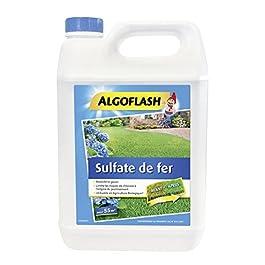 ALGOFLASH Sulfate de Fer Liquide, Jusqu'à 55m², Dosette incluse, 5 L, MOLI5