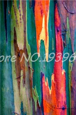 Ventes! 200 pcs/sac Rare arc en ciel, arbre tropical Showy, vivace Bonsai Potted Maison et Jardin (3 ing mixtes GRAINES SEULEMENT)