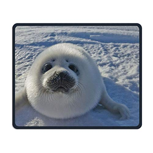 Kanada Apotheke (Baby Arctic Seal In Kanada Büro, Spiel notwendig, Gute Partner Maus, Mauspad)