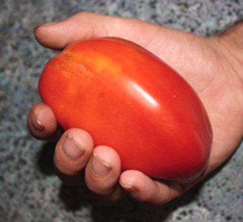 Hog Coeur Tomate - HÉRITAGE - GRANDE SAVEUR! 20 graines!