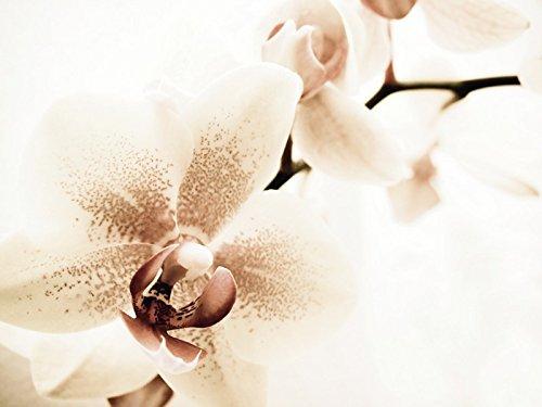 Artland Poster oder Leinwand-Bild fertig aufgespannt auf Keilrahmen mit Motiv Nettesart Orchidee abstrakte Collage Botanik Blumen Orchidee Digitale Kunst Creme D0RN