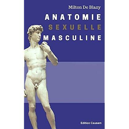 Anatomie sexuelle masculine