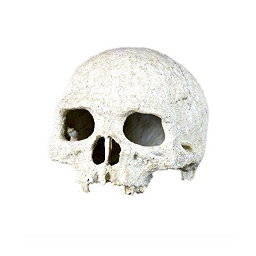 rettili-decorazione-di-terrari-fai-da-te-abbellimento-ornamento-cranio-umano