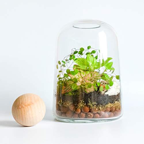 Le kit terrarium