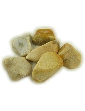 Versteinerte Koralle 100 Gramm Edelstein Trommelsteine
