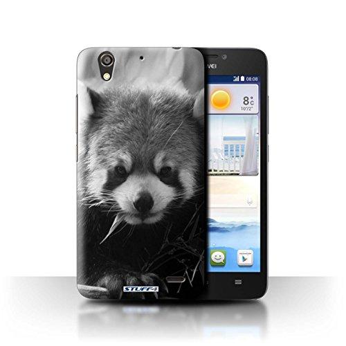 Stuff4® Hülle/Hülle für Huawei Ascend G630 / Waschbär Muster/Zoo-Tiere Kollektion