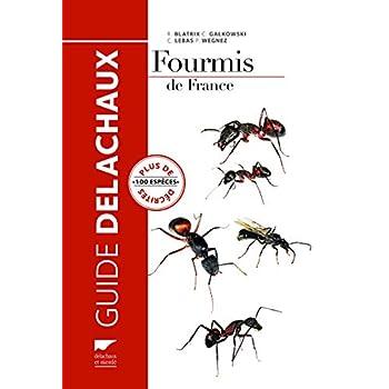 Fourmis de France. Plus de 100 espèces décrites