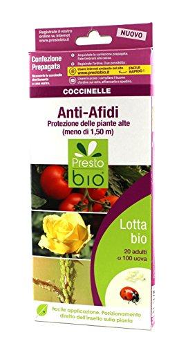 coccinelle-per-la-lotta-biologica-agli-afidi-delle-piante-insetti-utili
