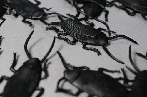 (12 gruselige Kakerlaken gross ca. 6x3cm)
