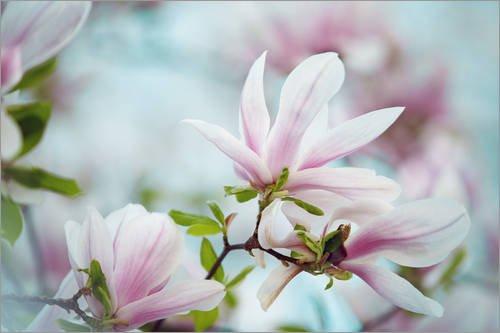 Pastell-magnolia (Leinwandbild 60 x 40 cm: Magnolien von Nailia Schwarz - fertiges Wandbild, Bild auf Keilrahmen, Fertigbild auf echter Leinwand, Leinwanddruck)