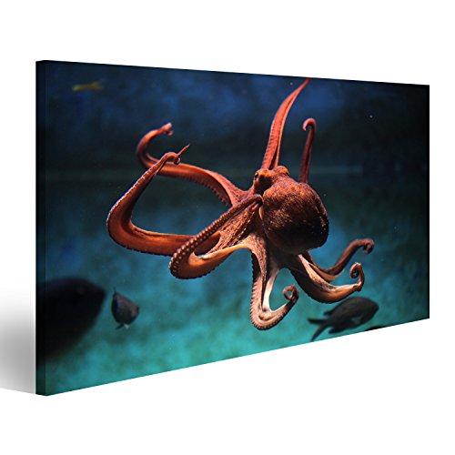 islandburner Bild Bilder auf Leinwand Krake Octopus unter Wasser Tauchen Poster, Leinwandbild, Wandbilder