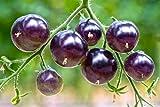 Lila Tomaten 10 Samen -voll von Antioxidantien, Spaß zu wachsen, süß (Tomato Purple)
