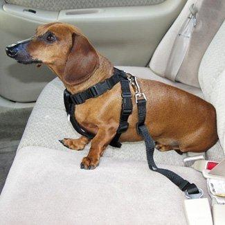 Hunde Sicherheitsgurt für das Auto *Schwarz* -